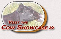 Visit the Cow Showcase